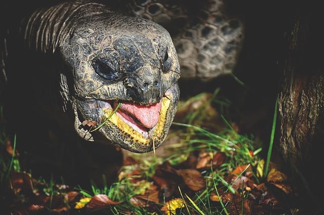 hlava želvy