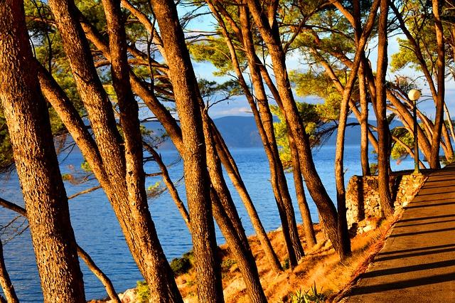 moře a stromy